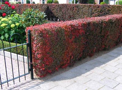 Nízké zahradní ploty